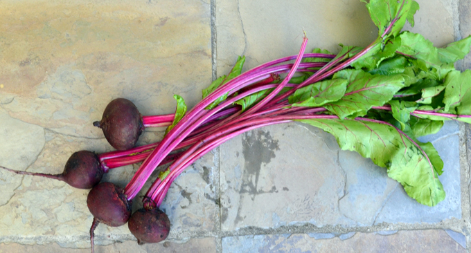 Organic red beets from the local farmer's market | labellasorella.com