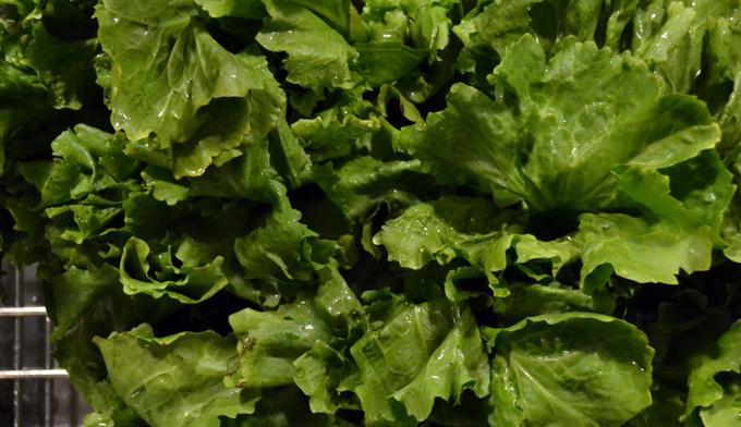 Fresh escarole | labellasorella.com
