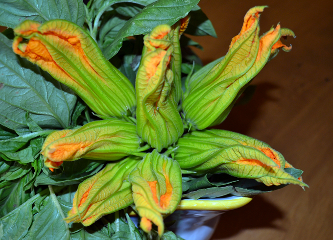 Freshly picked zucchini blossoms | labellasorella.com