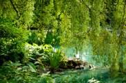 Jardin Botanique 1
