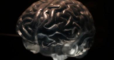 Primera experiencia sexual modifica circuito cerebral de recompensa