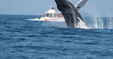"""Turismo anuncia que alemán de 23 años será el """"susurrador de ballenas"""" 2020"""