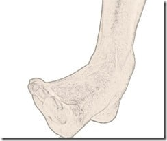 pronation - labo du skieur