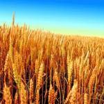 Mangiare il pane e generare con l'anima