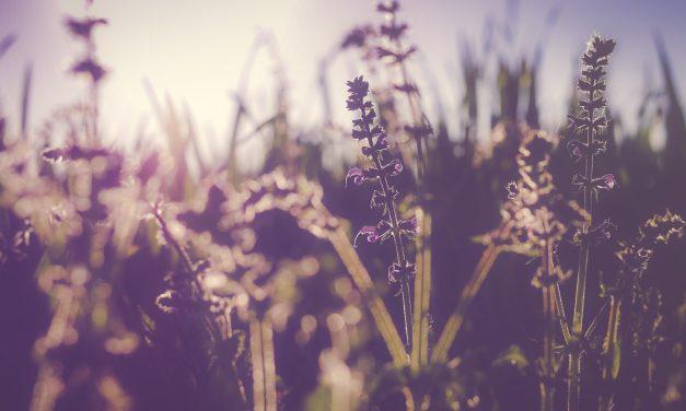 L' Equinozio di primavera, il giorno e la notte di uguale durata