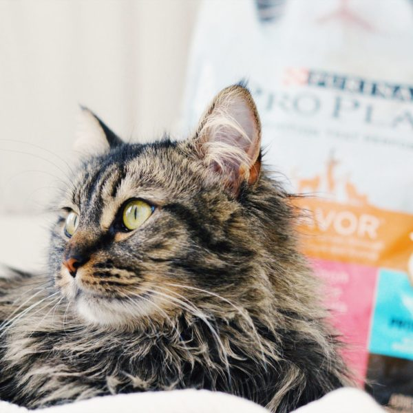 A Guide to Digestive Health For Your Family Cat