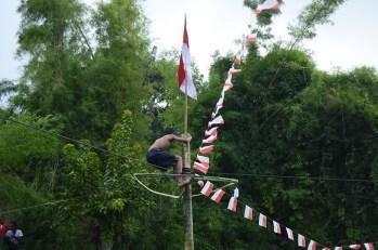 Seorang pemanjat pinang berhasil mencapai puncak dan mencabut bendera sebagai tanda keberhasilan