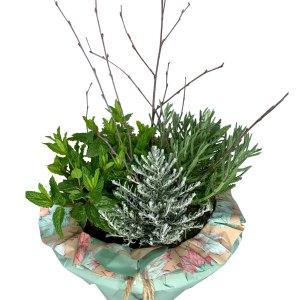 planta-aromatica-el-bartolo-01
