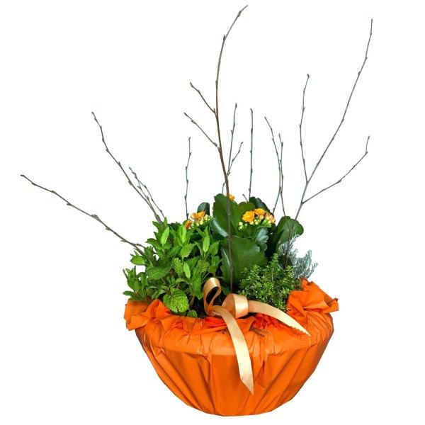 planta-aromatica-nules-01