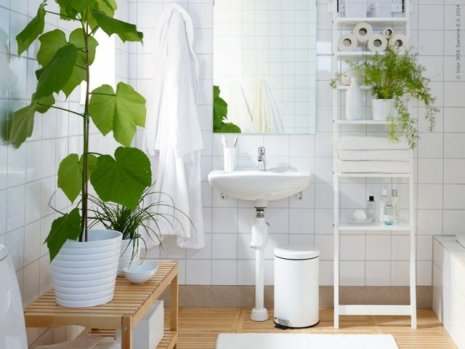 plantes salle de bain