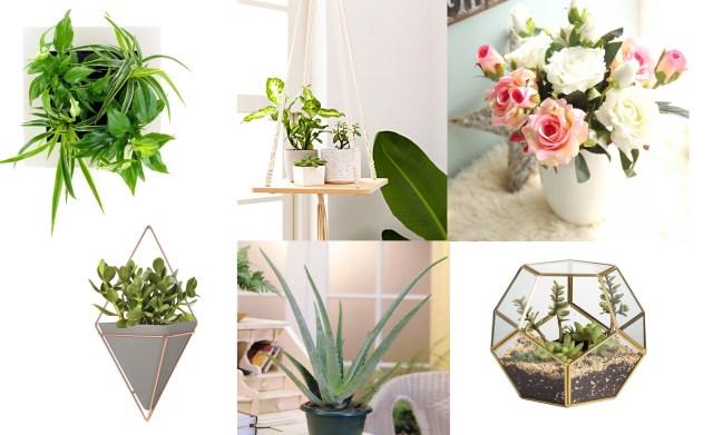 Relooker sa maison Plantes