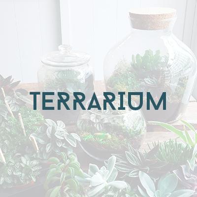 Boutique - terrarium