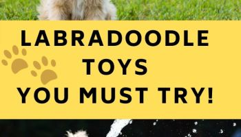 Labradoodle toys