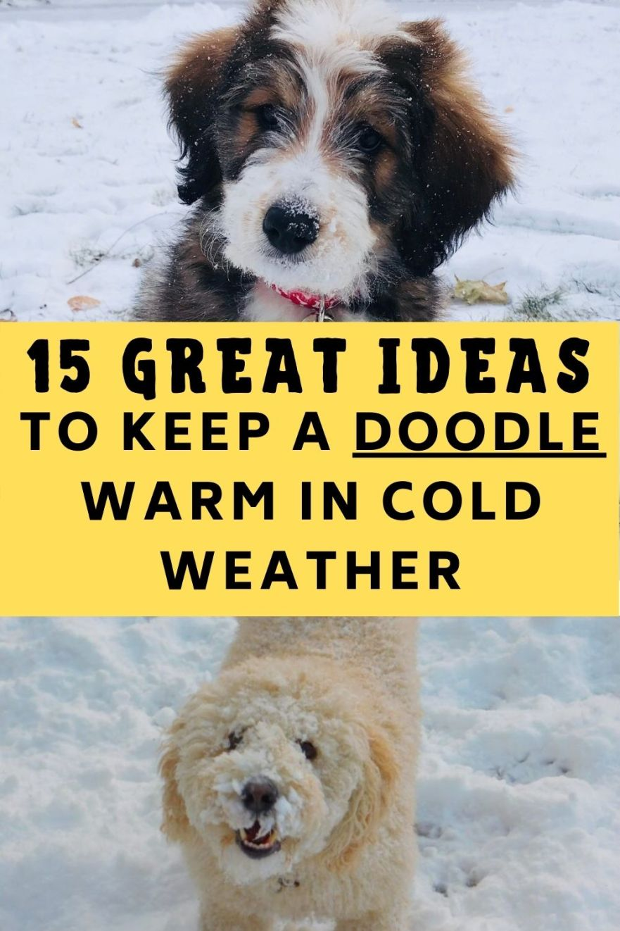 ideas to keep a doodle warm in cold weather