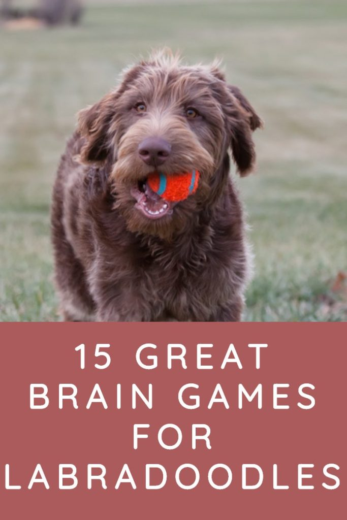 GREAT BRAIN GAMES FOR LABRADOODLES