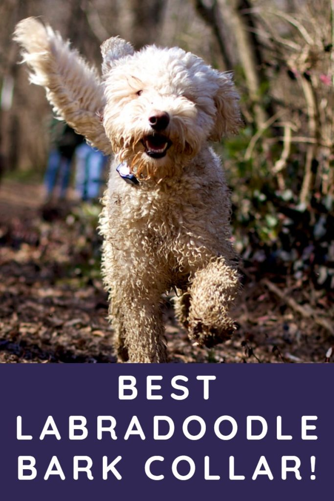 Best Bark Collar For Labradoodles