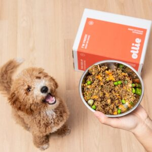 best labradoodle food