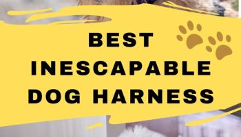 best inescapable dog harness