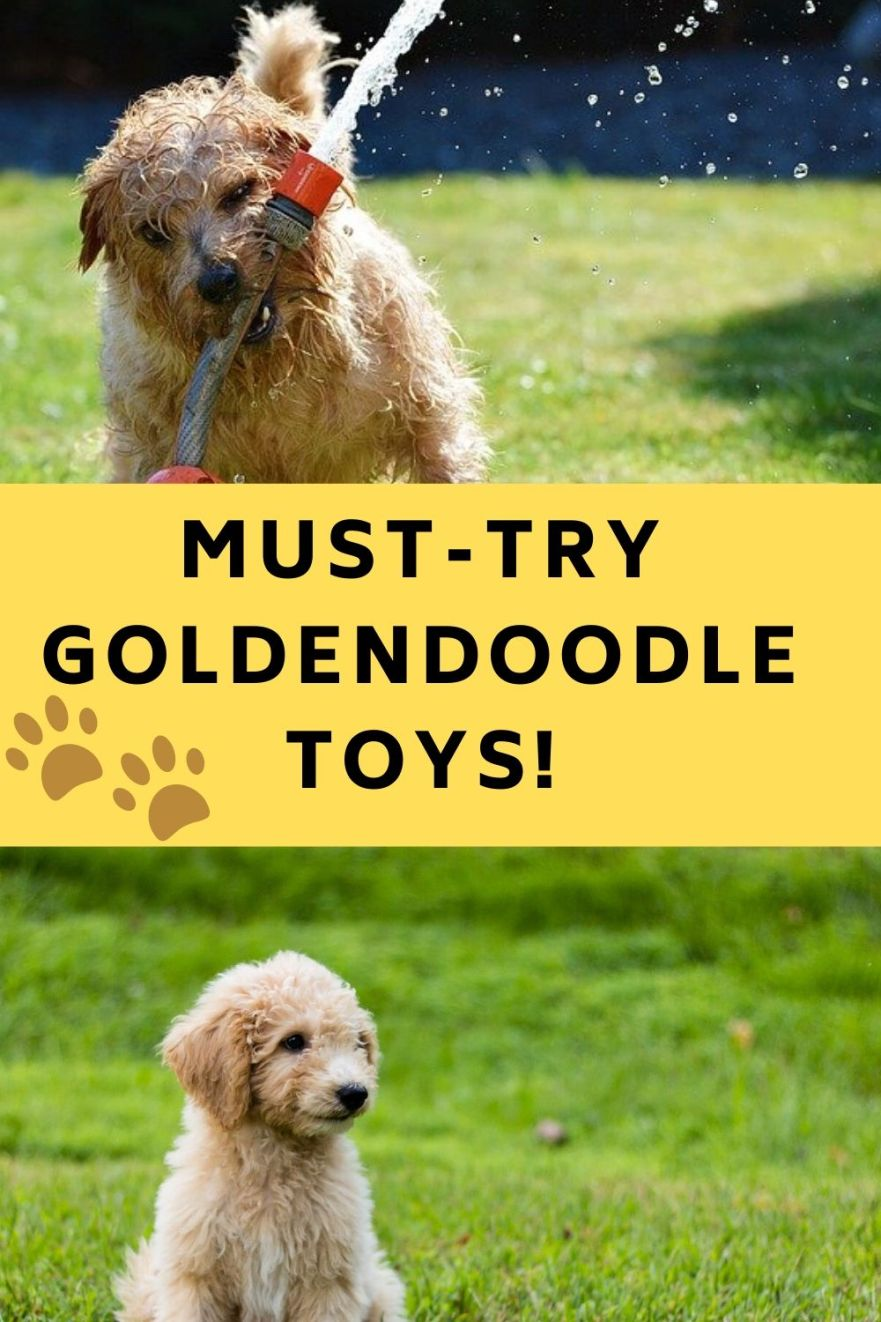 Goldendoodle toys