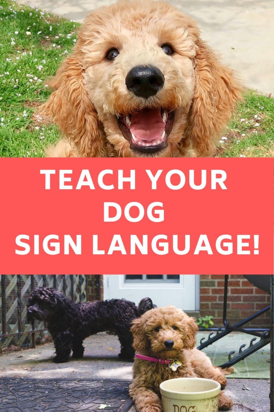 TEACH A DOG SIGN LANGUAGE