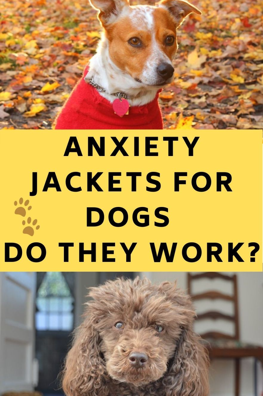 Do anxiety jackets for dogs work