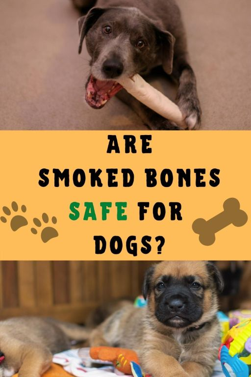 Are smoked bones safe for dogs