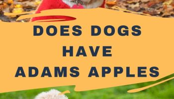 Do Dogs Have Adams Apples