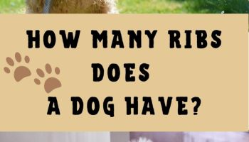 How Many Ribs Does A Dog Have
