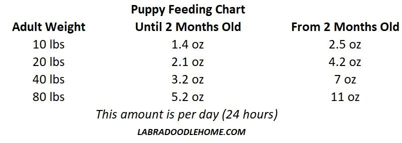 labradoodle puppy feeding chart