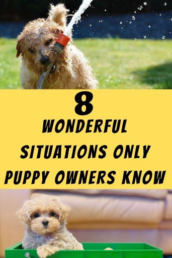 Wonderful Situations Only Puppy Owners Understands
