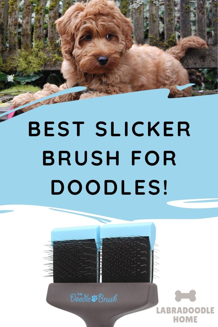 best slicker brush for doodles