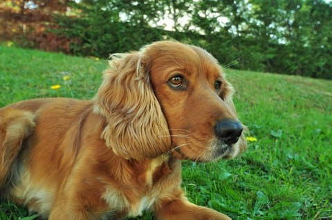 Dog Breeds That Are Perfect For Families