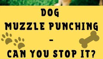 dog muzzle punch