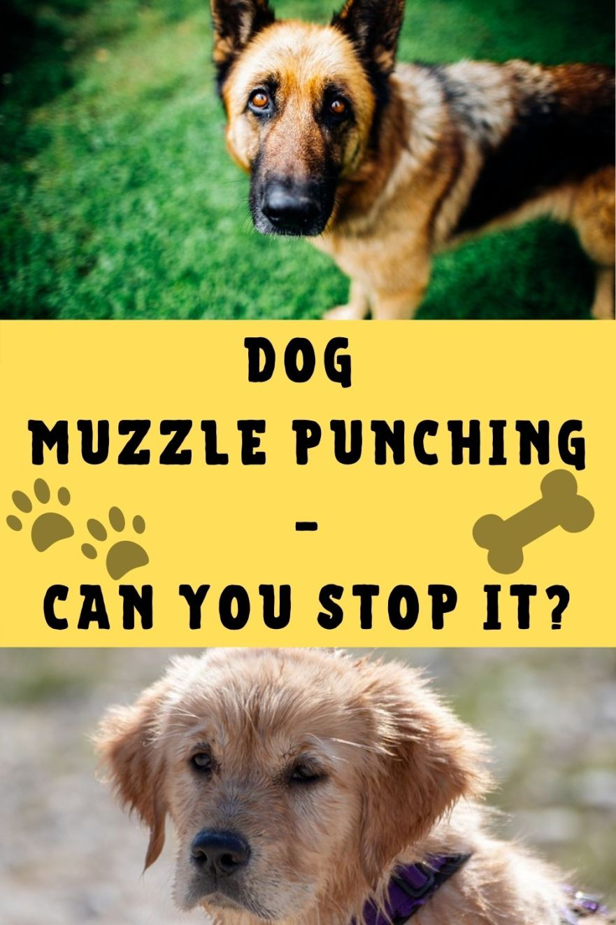 dog muzzle punch