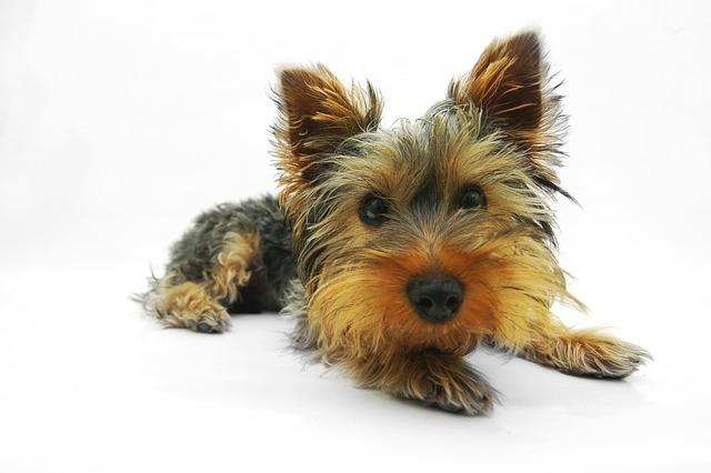Calm Dog Training