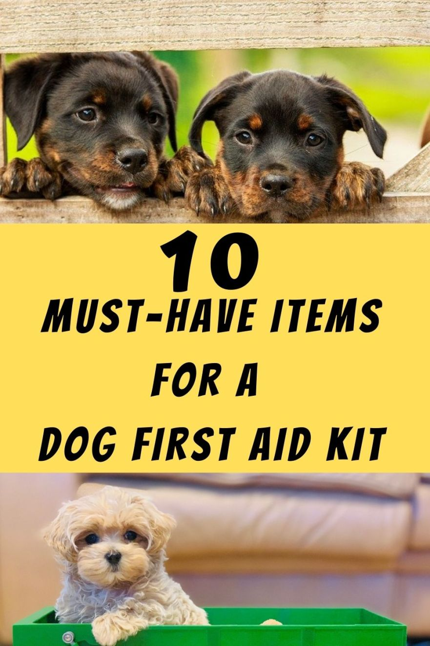 10 Indispensable Items For A Dog First Aid Kit
