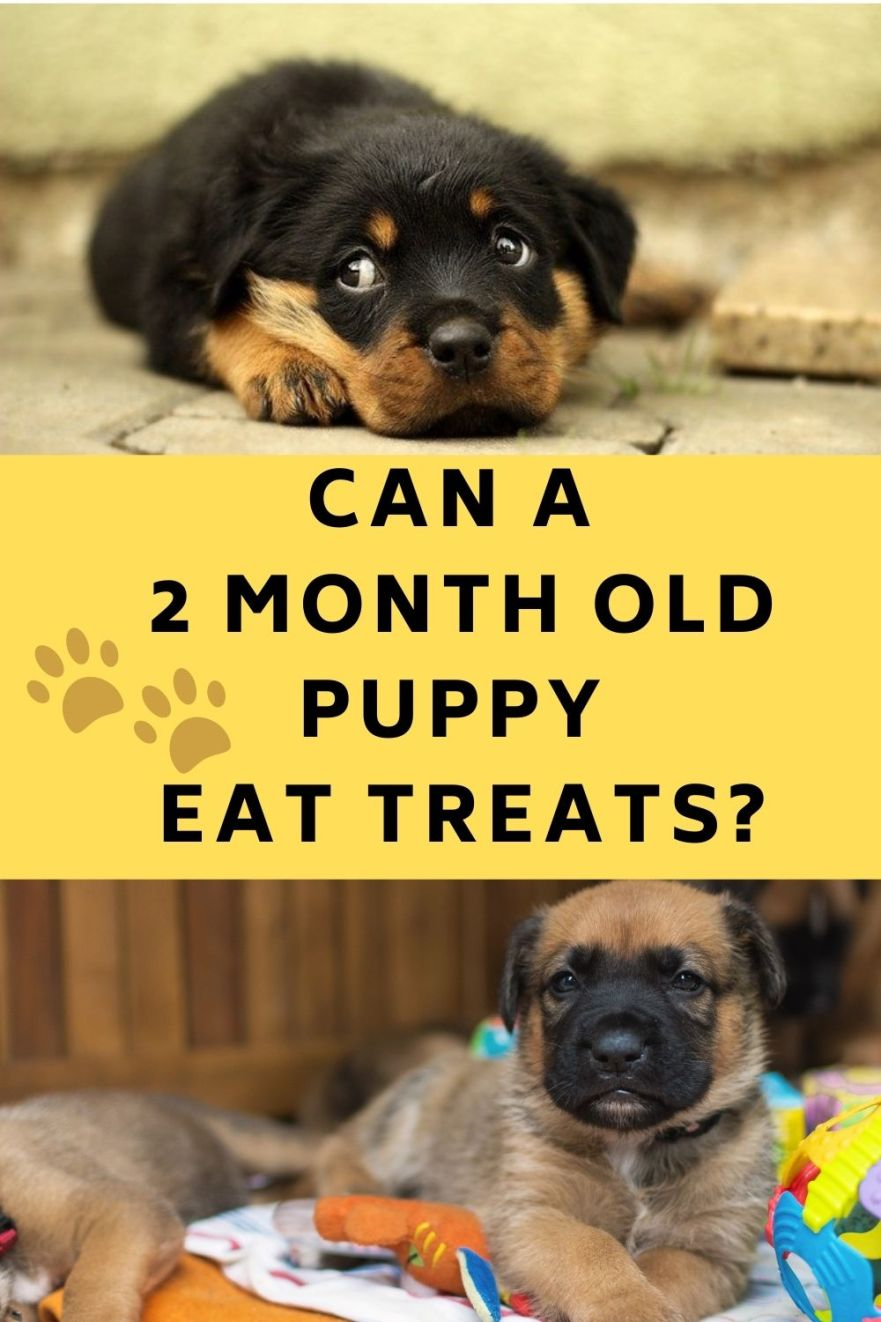 Can a Two Month Old Puppy Eat Treats