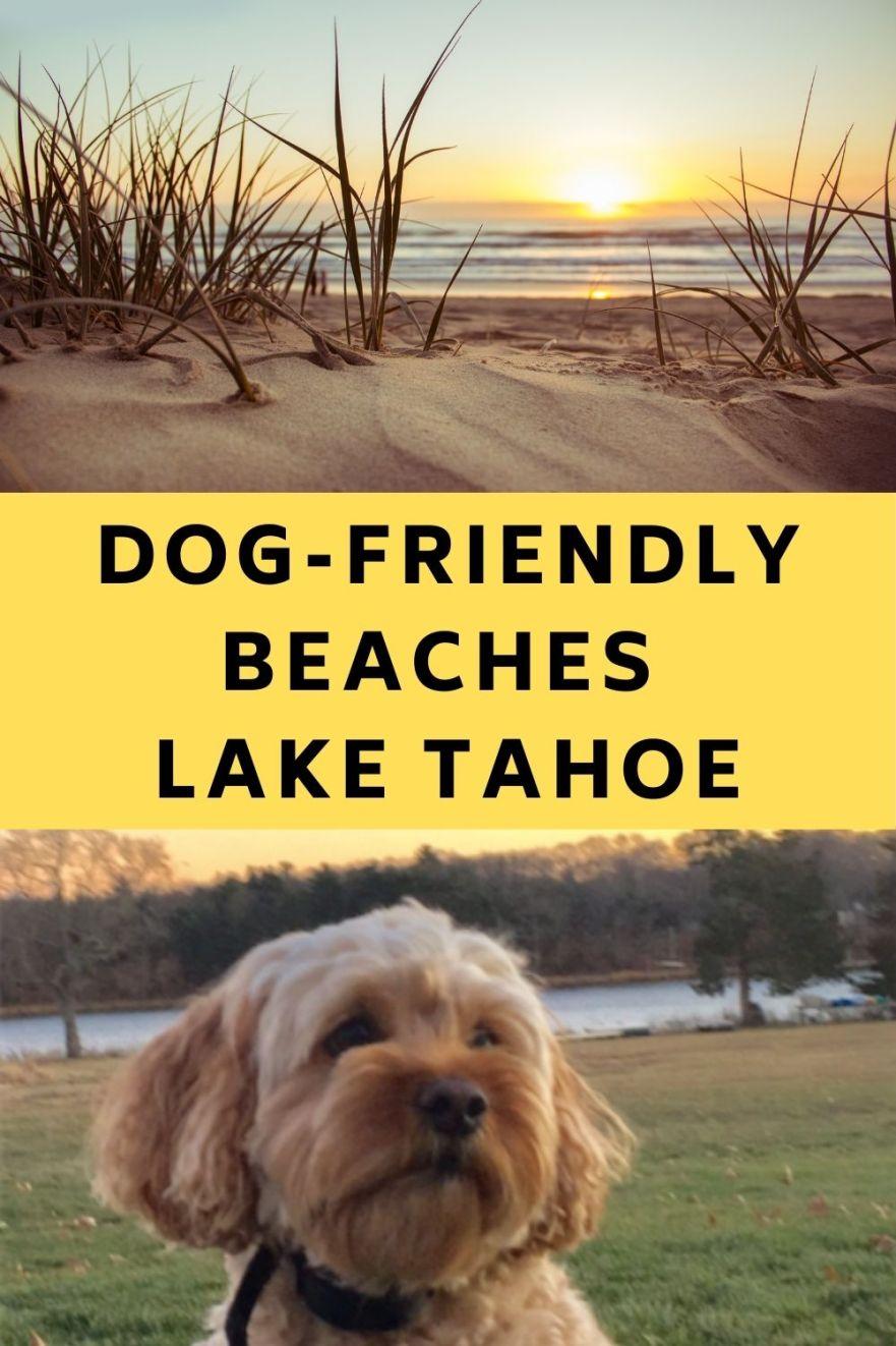 Dog-Friendly Beaches Lake Tahoe Dog-Friendly Beaches South Lake Tahoe Dog-Friendly Beaches North Lake Tahoe