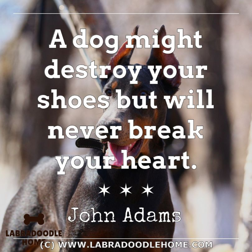 Dog Quotes about loyalty (2)