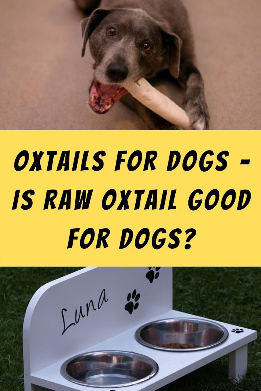 Oxtails For Dogs – Is Raw Oxtail Good For Dogs