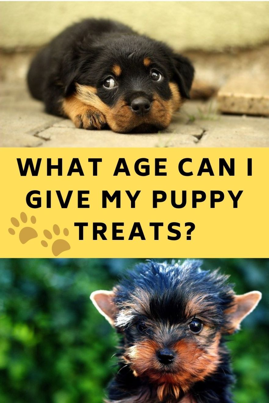 What Age Can I Give My Puppy Treats