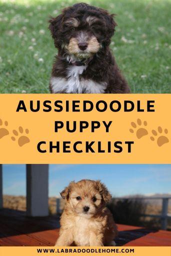 aussiedoodle puppy checklist