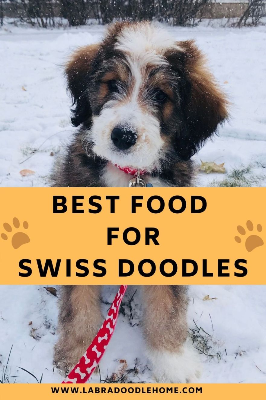 best food for swiss DOODLE