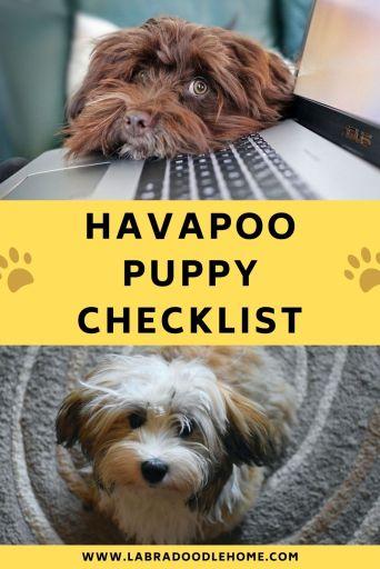 havapoo puppy checklist