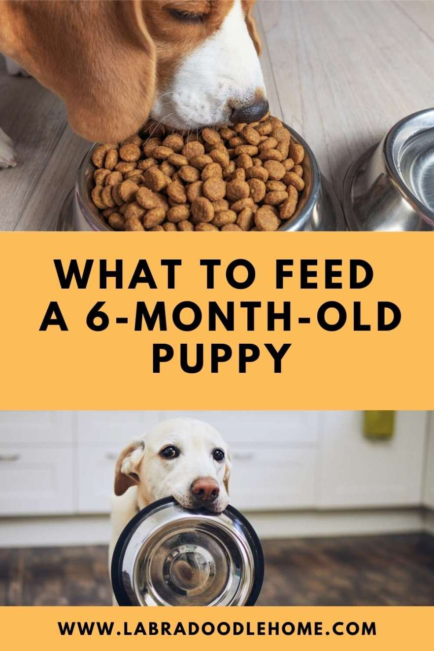 WHAT TO FEED A 6 MONTH OLD PUPPY