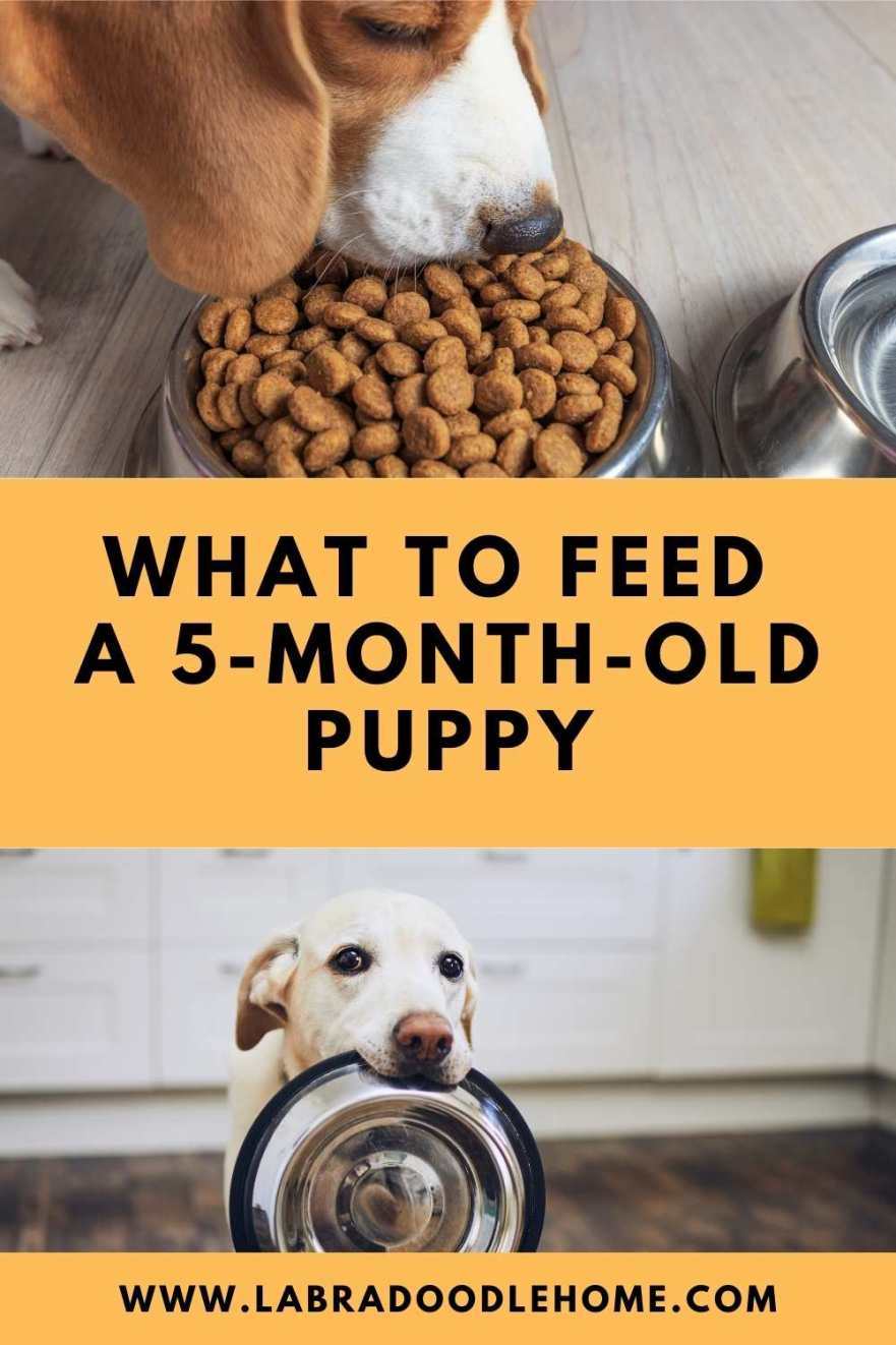 what to feed a 5 month old puppy