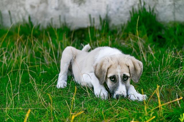Can Grain-Free Dog Food Cause Diarrhea