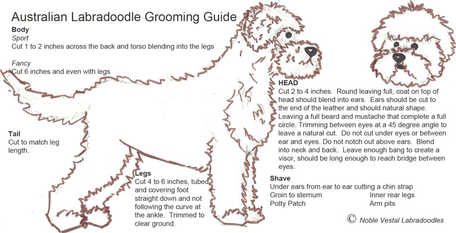 Grooming_Diagram copy 2