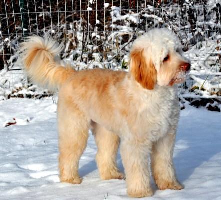 baileys first snow 6