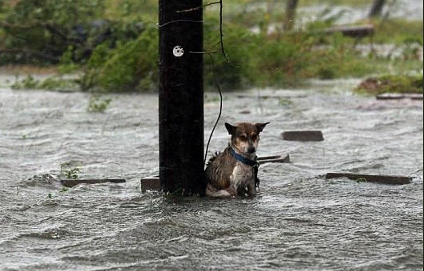 houston bajo el agua-dia siguiente-